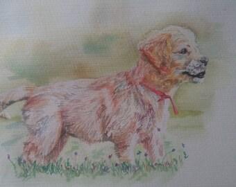 Golden Retriever Puppy in Watercolour