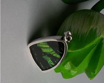 Real Butterfly Green Silver Pendant