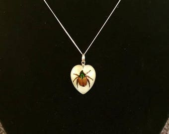 A real beetle pendant on a sterling silver chain