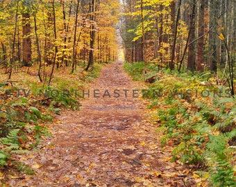 Hobbiton Trail Print