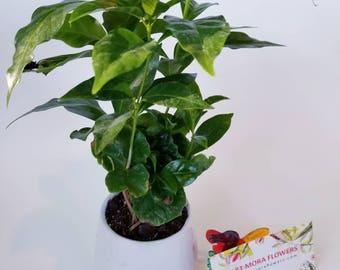 Mini Green Plants