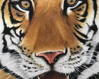 Tiger portrait in pastels