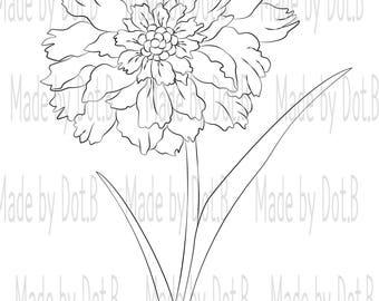 Botanical Scabiosa
