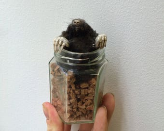 Northern mole emerging from glass jar