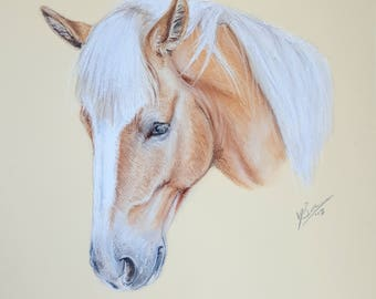 ORIGINAL 10 x 8 Haflinger Horse Portrait