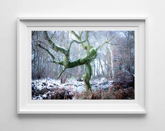Winter Dancing Tree, Original Photography Print, Woodland, Snow, Wall Art, Decor