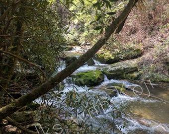 Conasauga River - Cohutta Wilderness GA #5