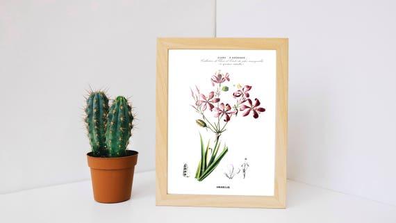 Vintage amarilis vintage print art vintage botanical for Amarilis decoration