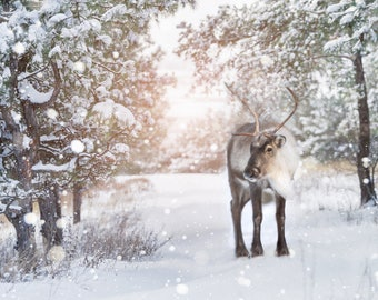 Reindeer snow scene christmas backdrop