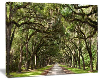 Live Oak Tunnel in Landscape Canvas Art Print and Metal Wall Art in Different Sizes (PT6553)