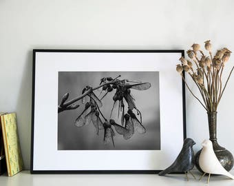 Helicopters, Photographic Print, 11x14