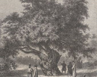 The Sycamore Of Mataryeh, Egypt 1859 - Old Antique Vintage Engraving Art Print - Men, Women, Fig, Tree, Old, Leaves, Sitting, Looking, Fence