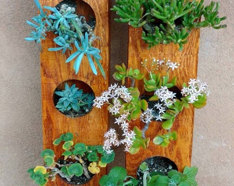 Display your succulents with the Circculent!