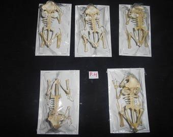 Taxidermy Real Frog Skeleton Duttaphrynus  Melanostictus 5 Pieces