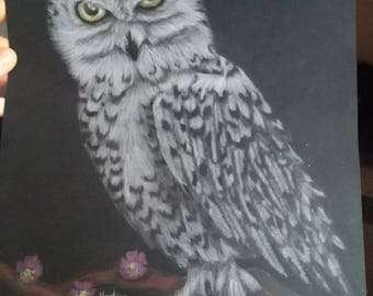 Original snowy owl drawing, colored by pencil