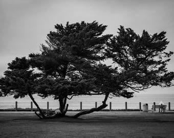 La Joya Tree