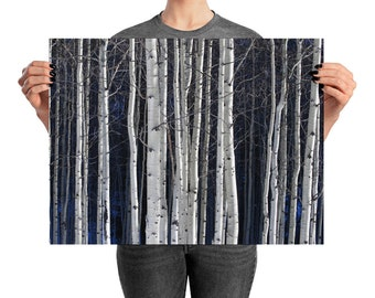 Aspen Grove in Winter - Printed Wall Art Photography, Home Decor, Photography, Poster, Nature, Trees