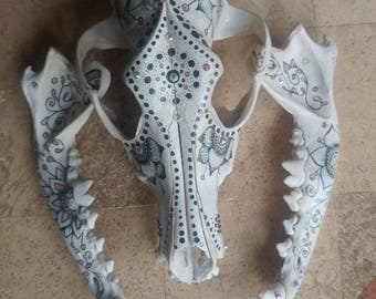 Hand painted coyotee scull