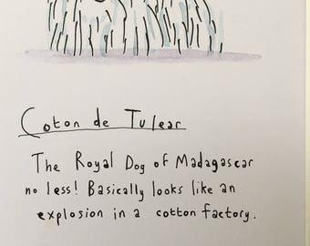 Coton de Tulear Dog Print