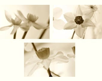 Sepia Photography Set, Daffodil Flower Art Set, Floral Wall Decor, Three Photo Set, Neutral Wall Art