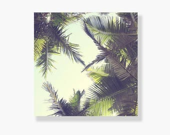 Palm tree photo canvas gallery wrap, coastal decor, tropicana wall art, green, coastal wall art, palm tree wall art, canvas - This is Bliss