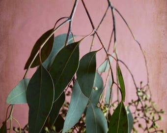 """Pink green wall art eucalyptus plant botanical nature wall art """"Eucalyptus Sprig Four"""""""