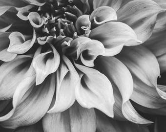 """Dahlia Flower Print - Black and White - Floral Wall Art - Gray wall art - Gift For Her - Nature Art - Botanical Print  """"Flowing Dahlia"""""""