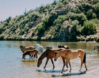 Wild Horses of the Salt River Fine Art Print #3