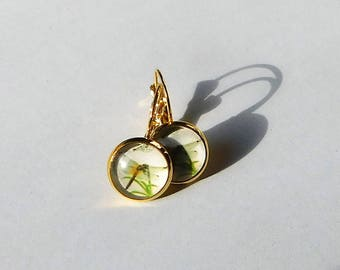 Ohrringe Cabochon Libelle gold