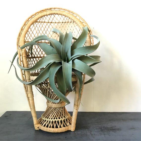 wicker mini peacock chair - rattan doll chair - plant pot stand - boho plant display