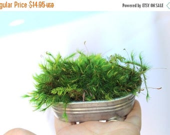 Save25% Galvanized tub with preserved mood and feather moss-NO water needed!-Miniature scale gardening-green moss garden