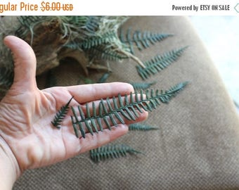 Save25% Ferns-REAL Preserved Coral ferns-20+ Green ferns in assorted sizes-invitations-Dried Floral-Boutonnieres