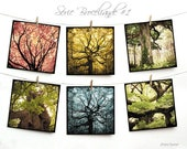 Set of six cards postcards 14 x 14 cm - 01 Brocéliande serie