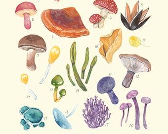 A Rainbow of Fungi