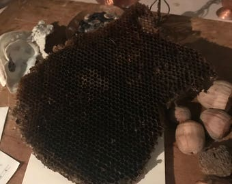 Natural Honey Comb, Bee Hive, honey bee wax, art supply, wild hive, bees wax, wild harvested