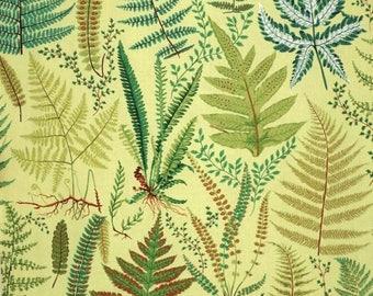 ON SALE Fabulous Fern Print on YELLOW Pure Cotton Fabric--One Yard