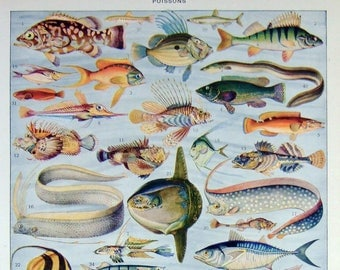 Antique Print FISH sea life ocean French Larousse 1923 color eels swordfish fishing color colorful