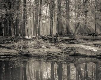 morning reflection, 8x10 fine art black & white photograph, nature