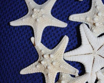 15% OFF 20) pcs, KNOBBY STARFISH, free shipping, top quality craft ready knobby starfish, fine looking armored starfish, shell crafts,  #65