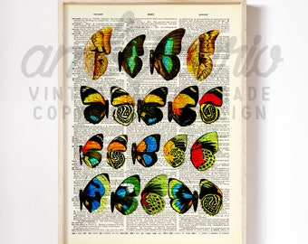 Butterfly Wings Colorful Anituqe Book Plate Diagram Original Print on a Unique Unframed Upcycled Bookpage