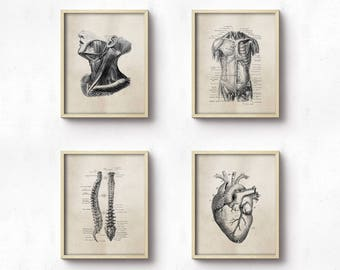 Anatomy Art Prints - Office Art - Medical Student Graduation Gift - Set Of Four - Science - Doctor's Office Decor - Brown Neutral - SKU:8928