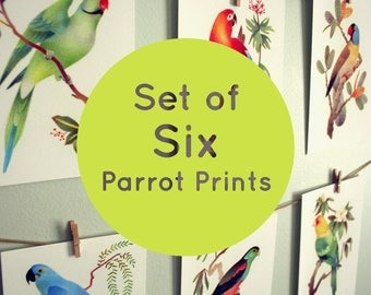 Parrot Illustration Art Prints – Set of 6 – Extinct Birds – 4x6 Print – Colorful Bird Lover Gift