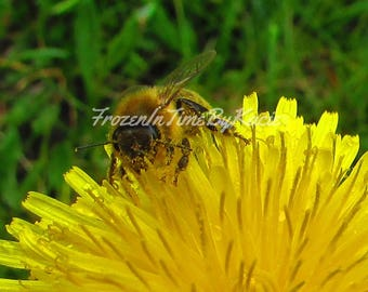 Busy honey bee - Digital download photo