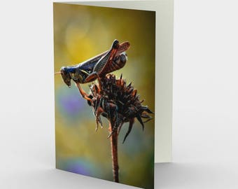 Grasshopper Card, Blank Note cards, Nature Note Cards, Greeting Cards, Three Note Cards, 5x7 Cards, Nature Blank Card, All Occasion Cards