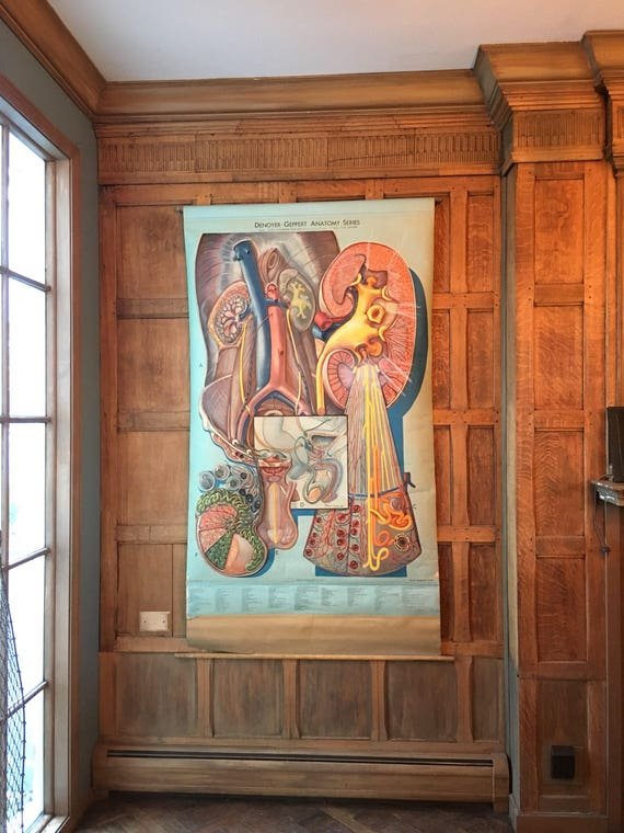 Urinary System Pull Down Chart, Denoyer-Geppert Anatomy Series, Large Medical School Chart, Anatomical Chart, Anatomy Art, Medical Oddity