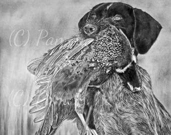 "Deutsch drahthaar with pheasant drawing print: 13x18"" print of a German wire haired pointer, drahthaar art, drahthaar drawing, griffon dog"