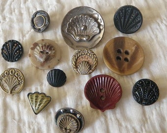 Collection of Seashell Buttons 13 Buttons Different materials