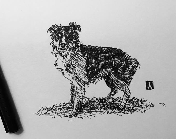 KillerBeeMoto: Original Pen Drawing of a Border Collie Sketch Sheep Dog
