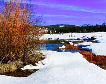 Vivid Colors of Truckee Postcard