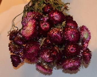 Strawflowers, Burgundy strawflowers, Dried strawflowers